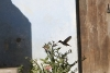 A bad photo, but: nevertheless guys - it's a real colibri!